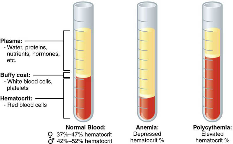 what does it mean if your hematocrit is low