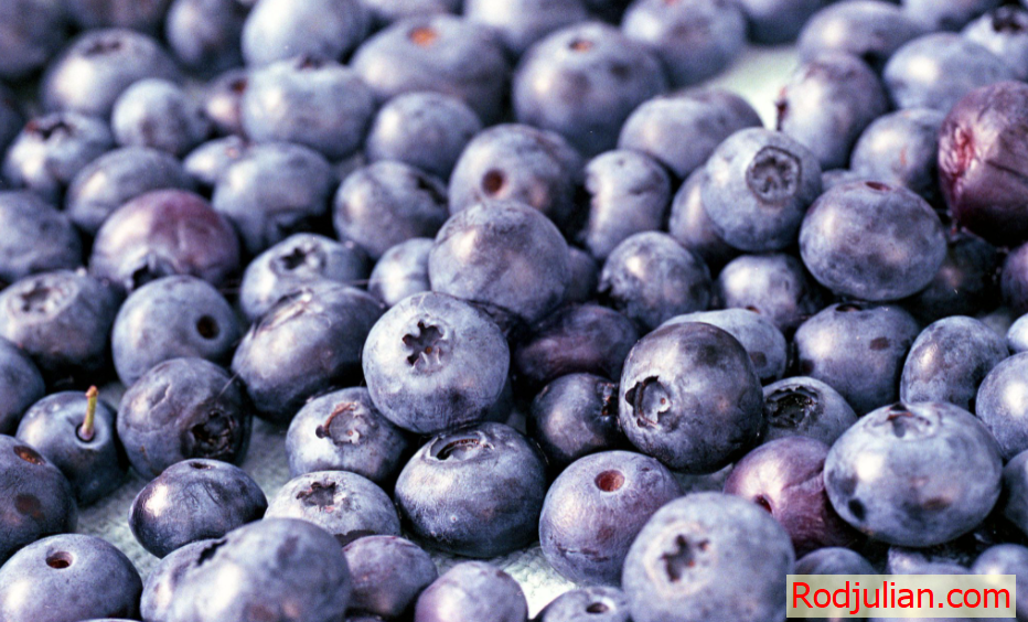Why you should eat blueberries every day! Great for the brain!